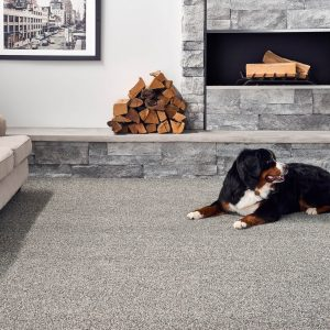 Pet friendly Carpet | Country Manor Decorating